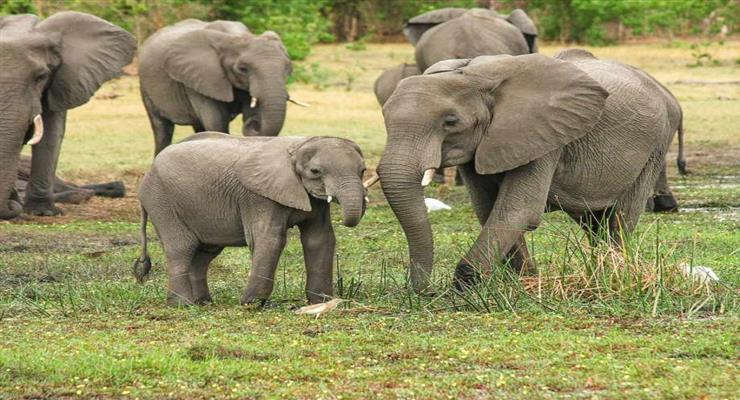 блискавка вбила слонів