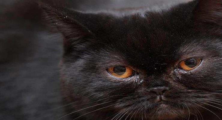 кішка врятувалась від пожежі