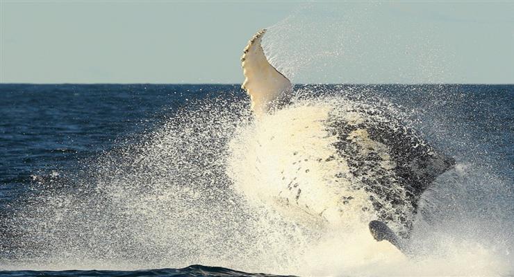 кит збагатив моряків