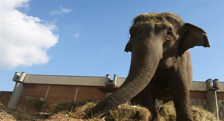 тестування слонів в заповіднику