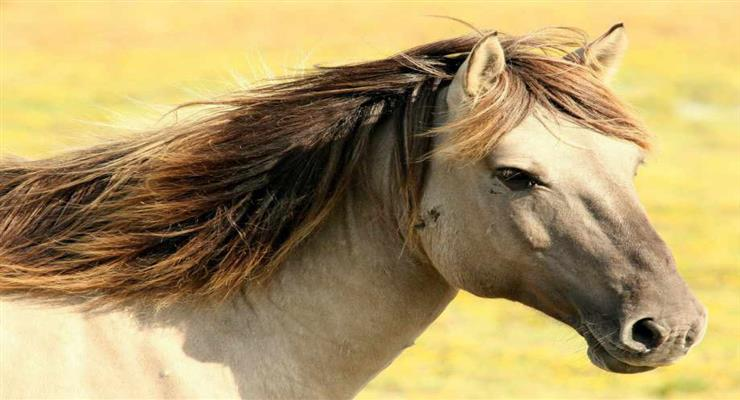 загибель коней в Казахстані