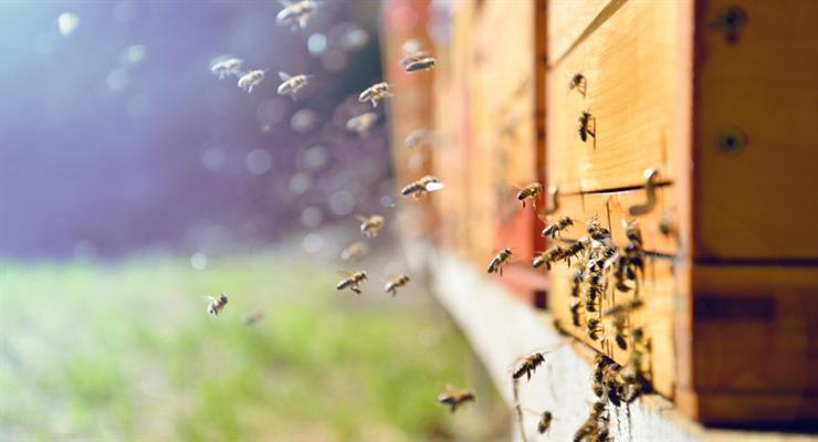 пожежі в Греції знищили тисячі вуликів, виробництво меду знаходиться під загрозою