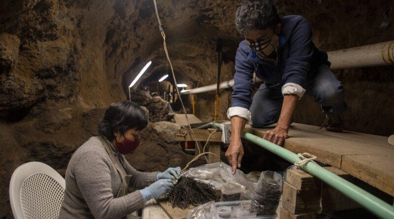 букети віком понад 1800 років знайшли в Мексиці