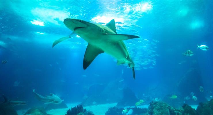 акула розірвала серфера біля берегів Австралії